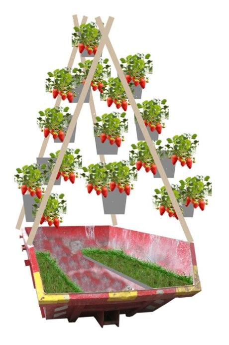 Containertuin-met-aardbeien